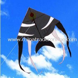 Black fish kite