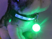 LED Light Pet Collar from China